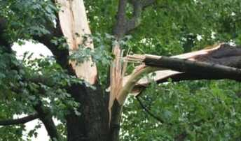 photo tree removal service asheville nc